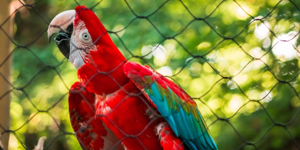 Macaw Parrot in a Cage
