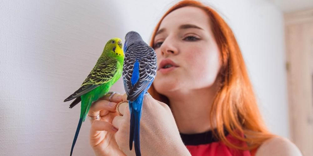 A woman speaking to two parakeets, on green and one blue, perched on her hands.