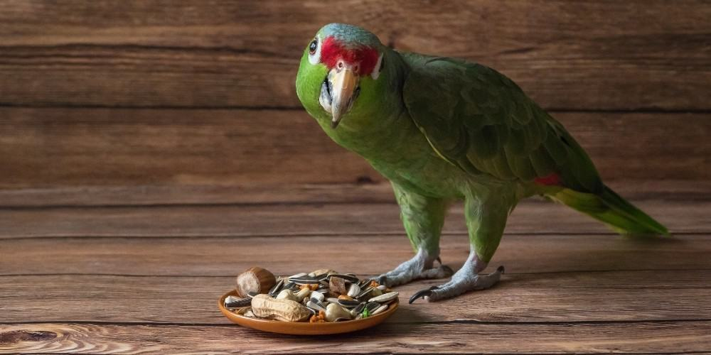 A green parrot with red above the beak standing in front of a dish of food.