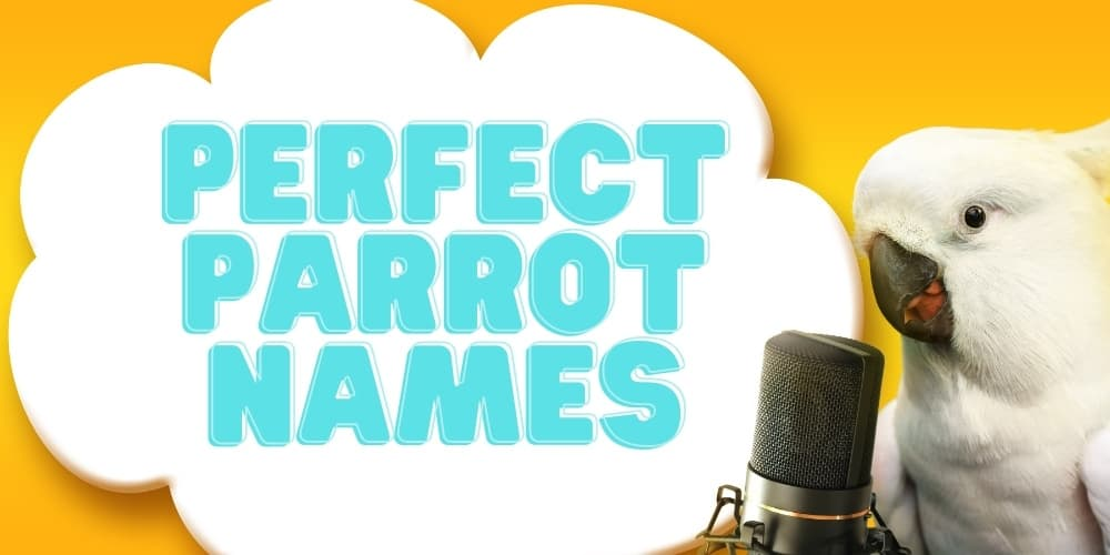 Perfect Names For Parrots