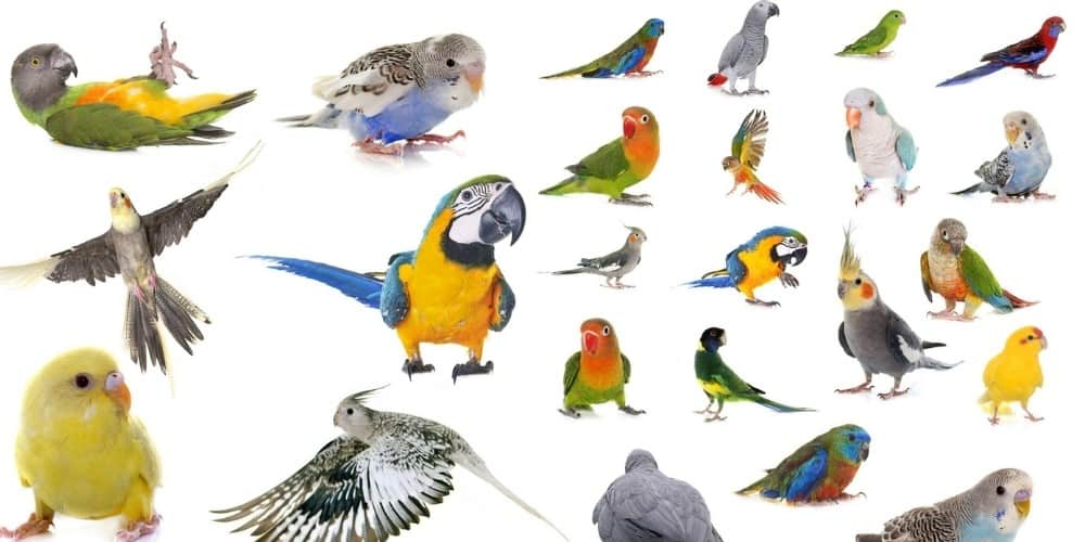 A variety of different parrots set on a white background.