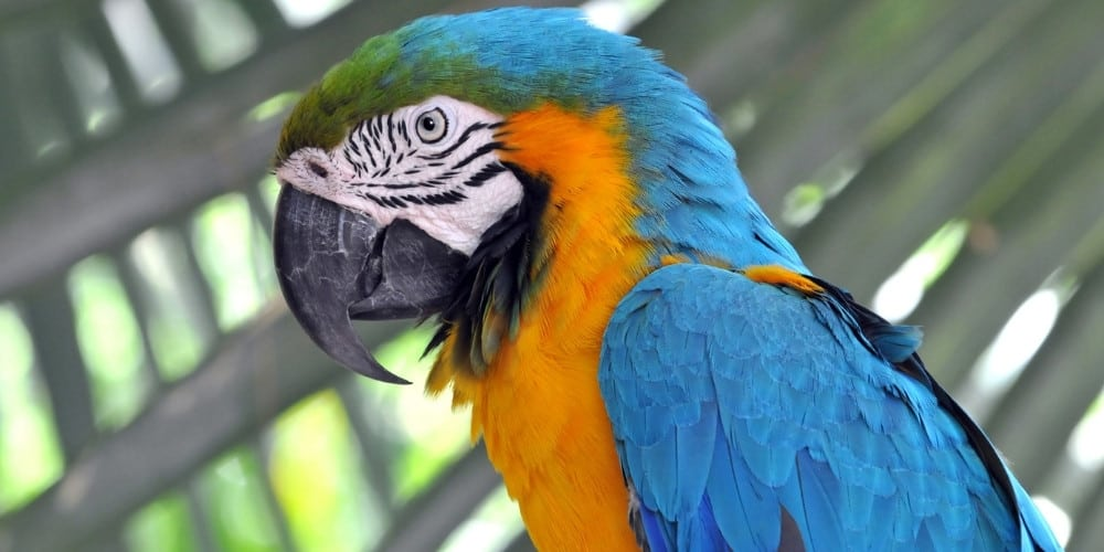 A blue-and-gold macaw in profile with palm tree leaves in the background.